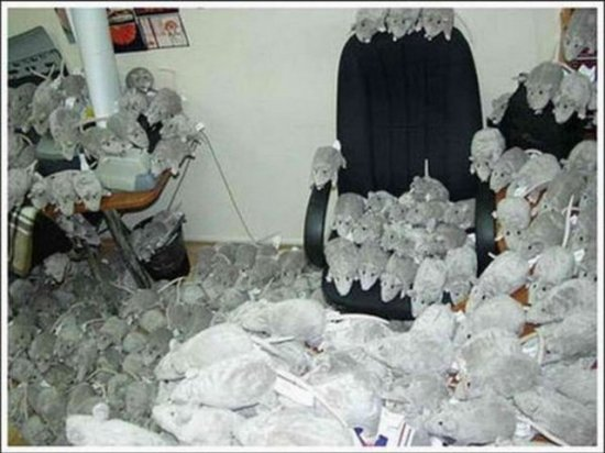 惡搞辦公室(KUSO)