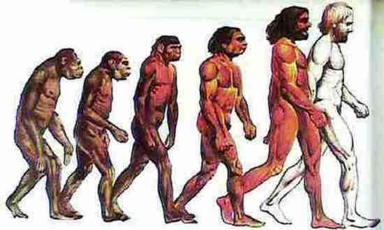 人類進化圖