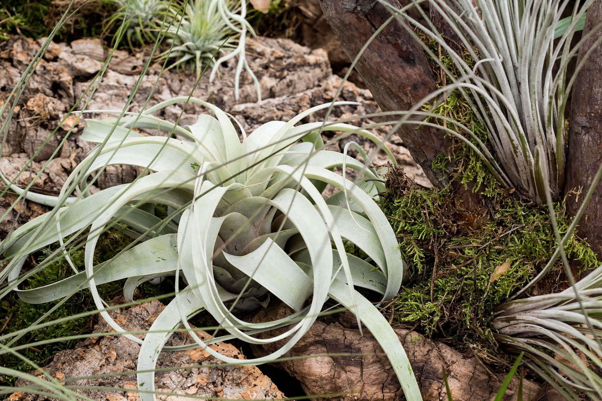 Unusual House Plants To Grow Bbc Gardeners World Magazine