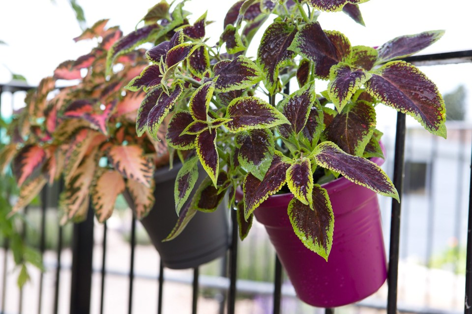 best plants for balconies bbc