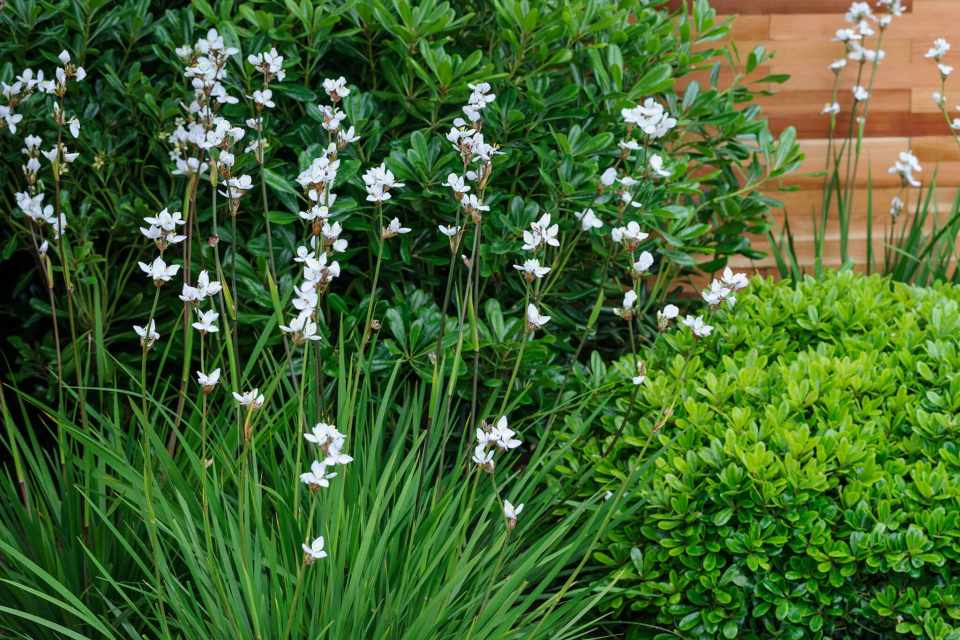 Best Plants For Narrow Borders BBC Gardeners World Magazine