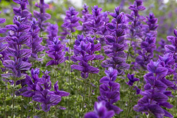 best plants with purple