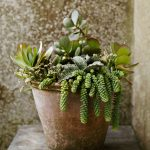 Succulent Pot Houseplant Display For Winter Gardens Illustrated