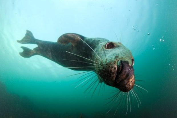 why do seals breathe