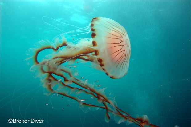 Cute Baby Pics For Whatsapp Wallpaper Jellyfish Are More Beneficial To Marine Life Than