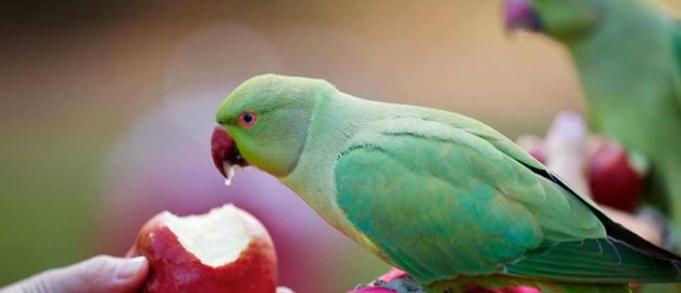 do parrots have taste