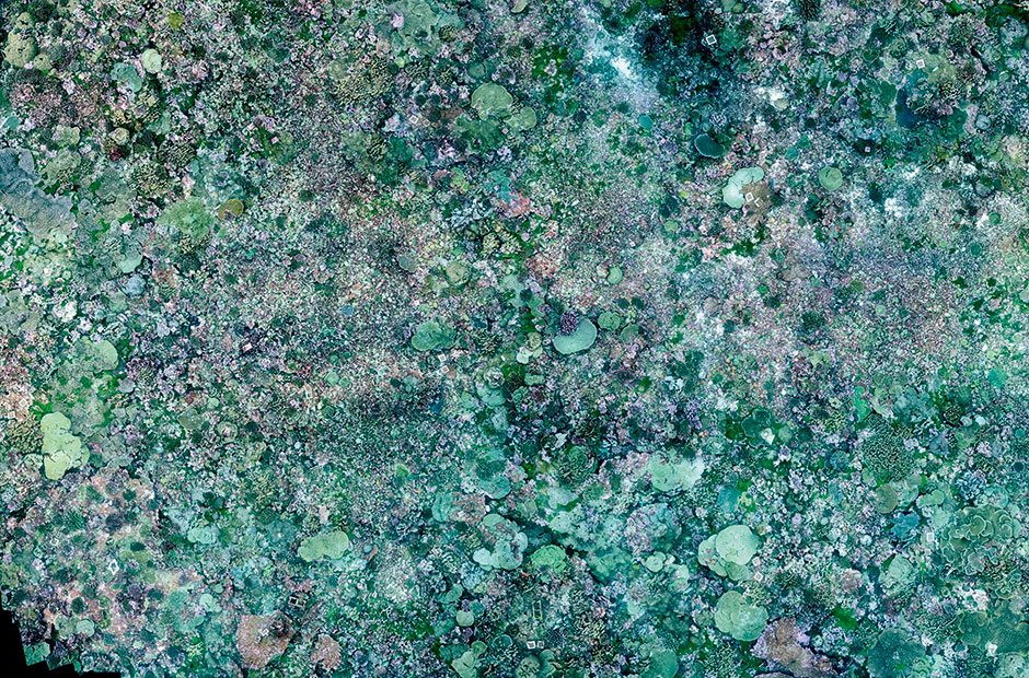 A photomosaic of a coral reef in the Palmyra Atoll, which was created from 2,700 images