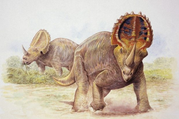 Centroceratops