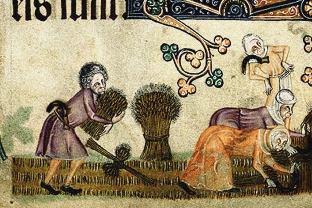 Image result for medieval manuscript beans
