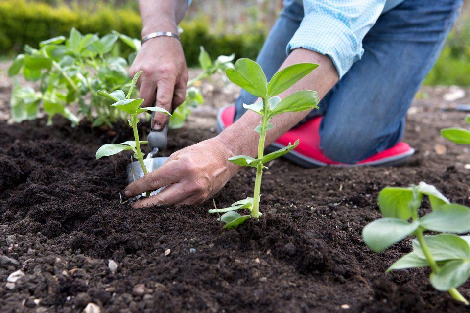 helping mom in gardening