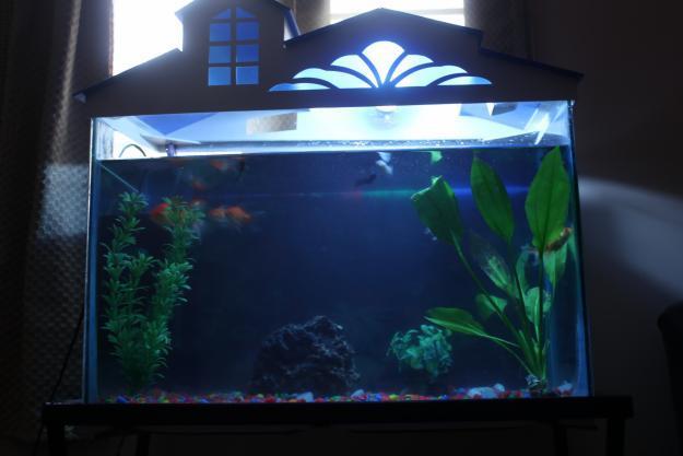 aquarium fishes for sale in bangalore dating