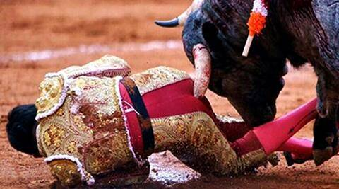 WATCH A bulls 11inch horn goes inside a bullfighters butt in this painful video  The Indian