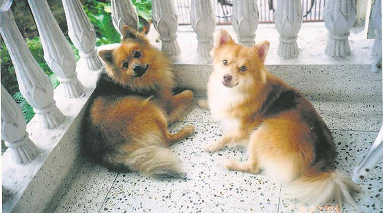 West Bengal news, West Bengal burrial grounds for pet, creche's for pet, Burrial grounds for pets, India news, national news, latest news