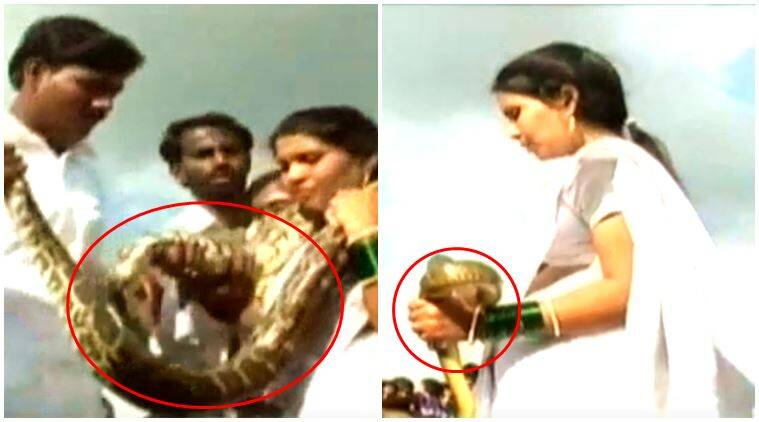 VIDEO: Bride and groom exchange SNAKE garlands; this bizarre wedding clip's going viral