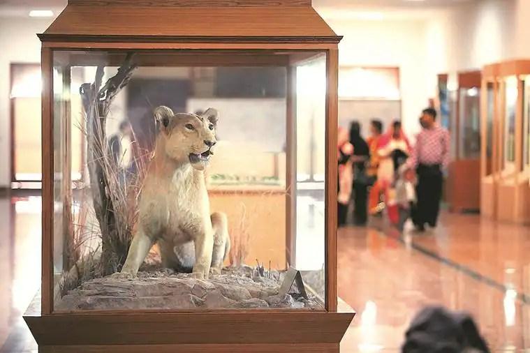 leopard, Rajasthan museum, Rajasthan museum fire, National Museum of Natural History in Delhi, dinosaur, albino tiger, rhino, Sawai Madhopur, FICCI, FICCI building, Rajasthan museum,