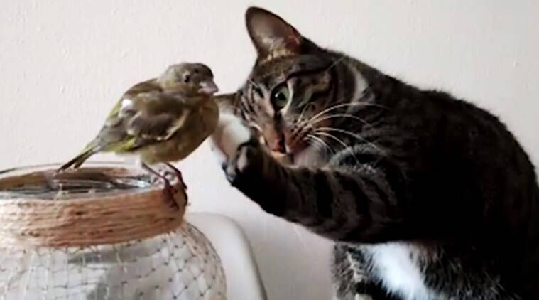 Cute Little Cat For Wallpaper Video Of A Cat Patting The Head Of A Bird And Not