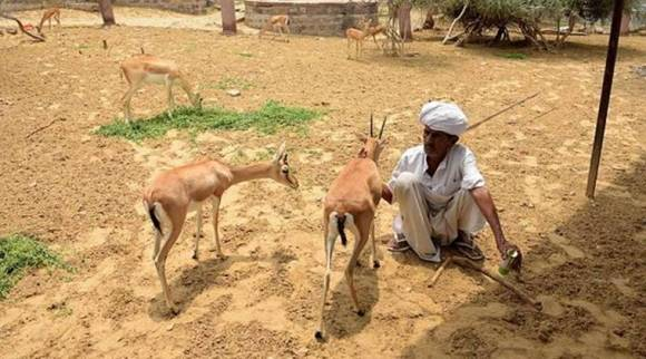 Bishnoi community vs Salman Khan: When protecting nature becomes a religion