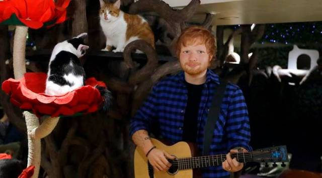 Ed Sheeran wax statue unveiled at cat cafe in London