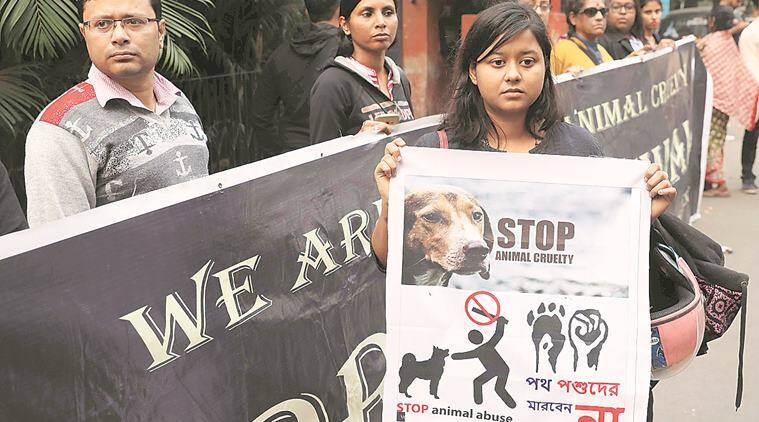 Puppy Killings Case: Both Accused Nursing Students Resume Classes, Sparking Fresh Protests