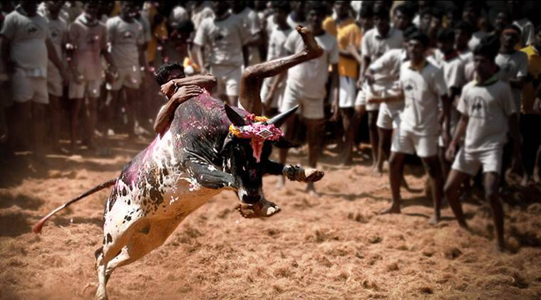 Jallikattu: Two Killed, 30 Injured During Festival In Tamil Nadu's Pudukottai