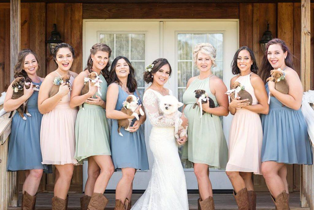 Adopt Don T Shop Bride And Bridesmaids Swap Flowers For Rescue Dogs To Promote Adoption Trending News The Indian Express