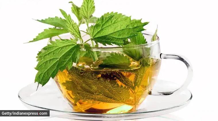nettle tea, what is nettle tea, health benefits of nettle tea, health, indian express, indian express news