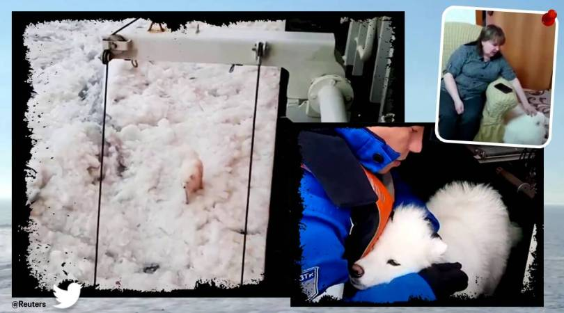 Dog stranded on floating ice in the Arctic rescued by Russian sailors. Watch video
