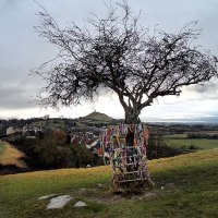 Glastonbury's Holy Thorn tree back from the dead