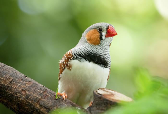 Image result for birds