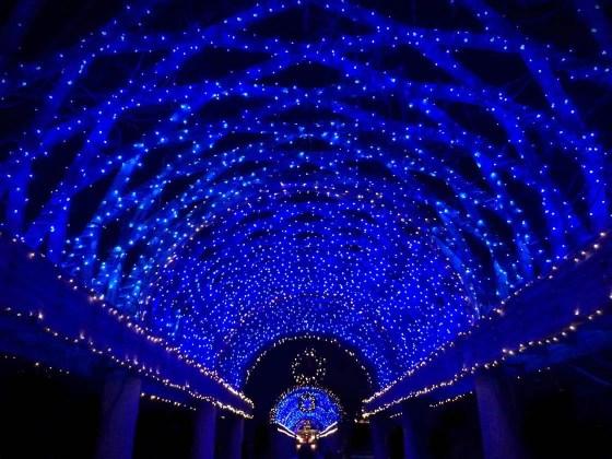Artificial Light iPhone Photos 7
