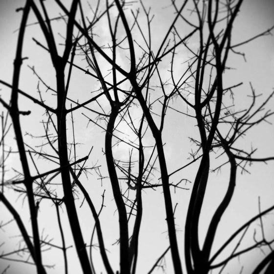 iPhone Photography Good Habits 1