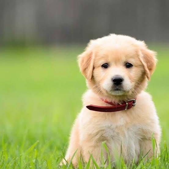 top 100 pet care