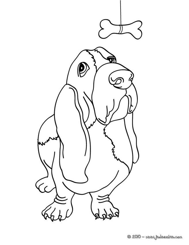 dessin du caniche et du bouledogue dessincoloriage