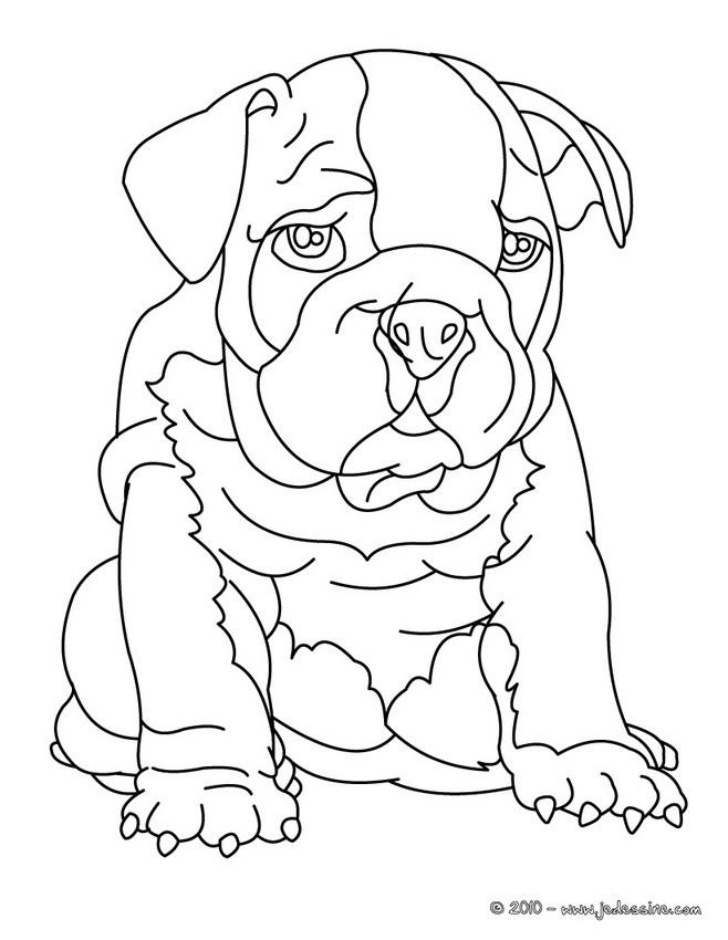 Dogue Allemand Coloriage De Chien Bouledogue