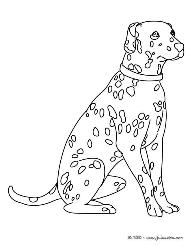 Coloriage De Chien Dalmatien