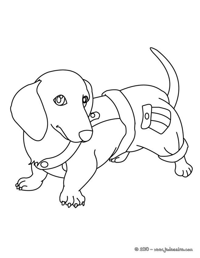 coloriage dessin chien teckel dessin a imprimer