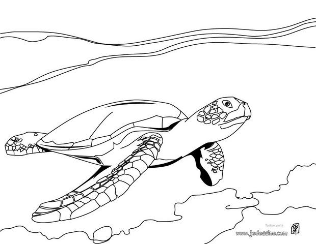 Coloriage Tortue Luth