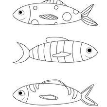 dessin poisson davril a colorier dessincoloriage