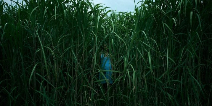 In the Tall Grass-4