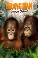 show Orangutan Jungle School