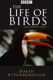 show The Life of Birds