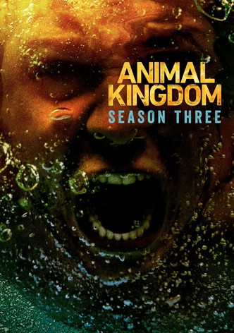 Animal Kingdom Saison 3 Streaming : animal, kingdom, saison, streaming, Animal, Kingdom, Season, Watch, Episodes, Streaming, Online