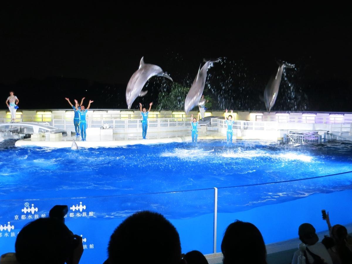 京都水族館で「夜のすいぞくかん」 活発なオオサンショウウオ ...
