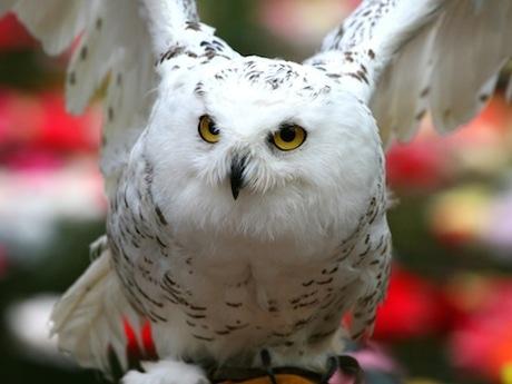 富士花鳥園でナイト企畫 世界のフクロウ約30種・100羽を観察 ...