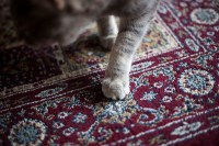 Cat Scratching Carpet - Carpet Vidalondon