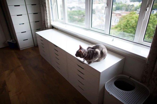 Indoor Cat Small Apartment Studio Flat
