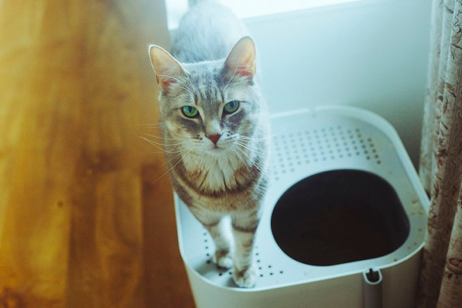 Cat Limited E Best Litter Bo