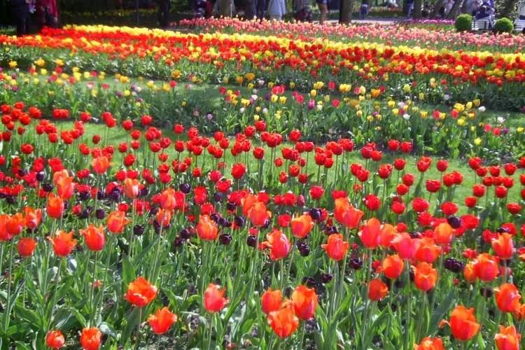باغی در برلین