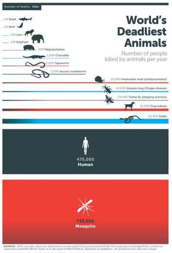 Animal Le Plus Dangereux Pour L'homme : animal, dangereux, l'homme, Découvrez, Classement, Surprenant, Animaux, Meurtriers, Homme, Ladepeche.fr