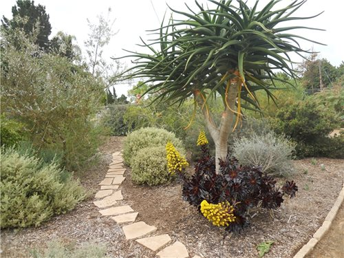 good plants san diego - landscaping